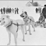 Sled dogs, Anglican Church in the background, Norway House c 1929-32. (UCCArchives bruce 143)